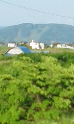 忠別川ランニング21km